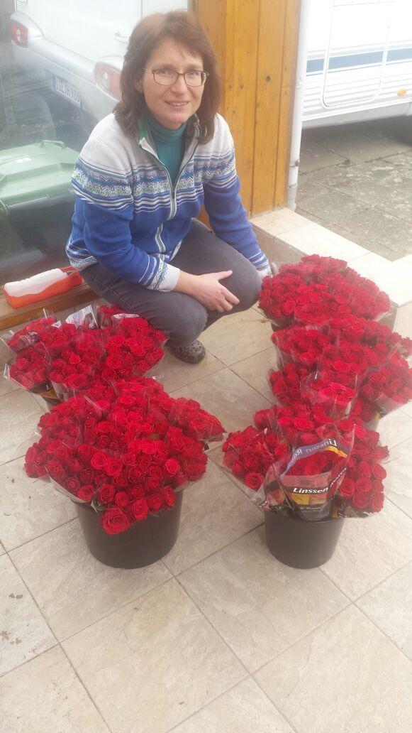 Rosen im Eimer